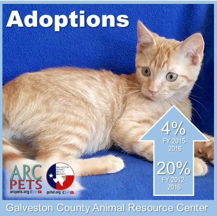 "Graphic with cat that reads ""adoptions up 4-percent 2015-2016"""