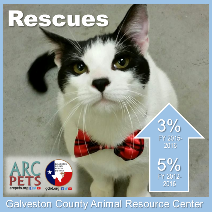 "Graphic with cat that reads ""Rescues up 3-percent 2015-2016"""