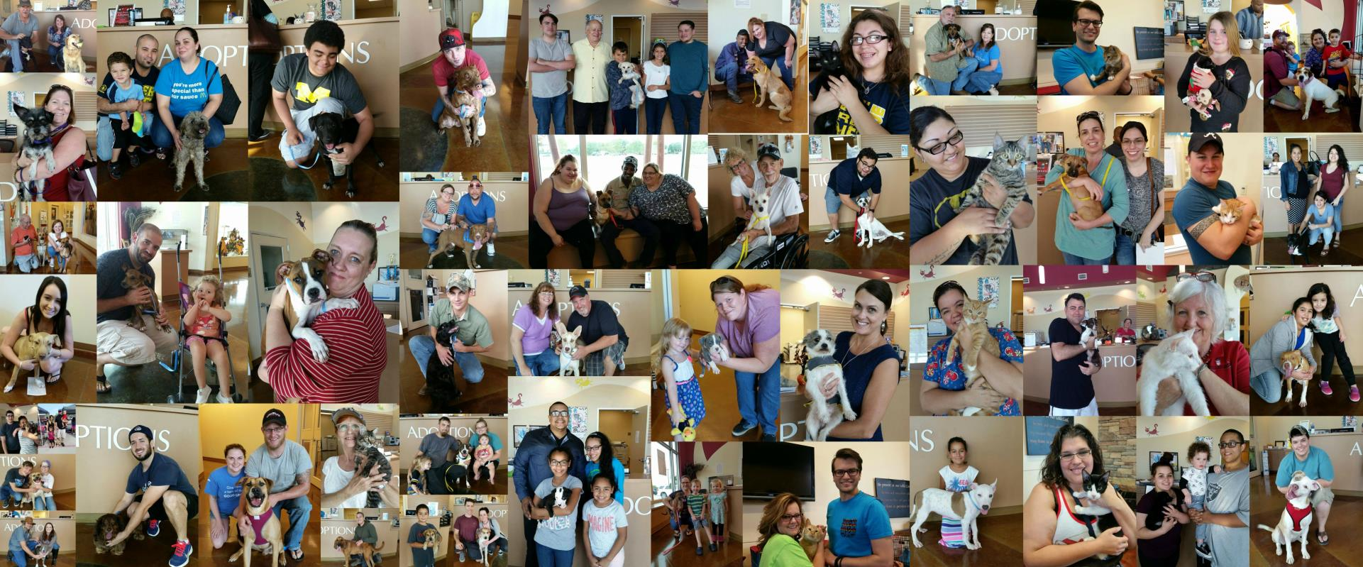 Collage of pet adoptions